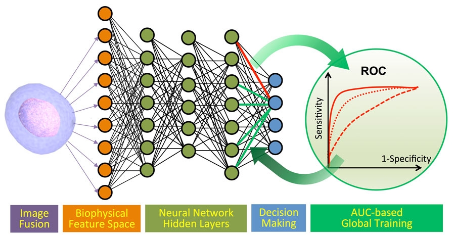 Figure 4. Machine learning pipeline: cancer cell and algal cell classification.
