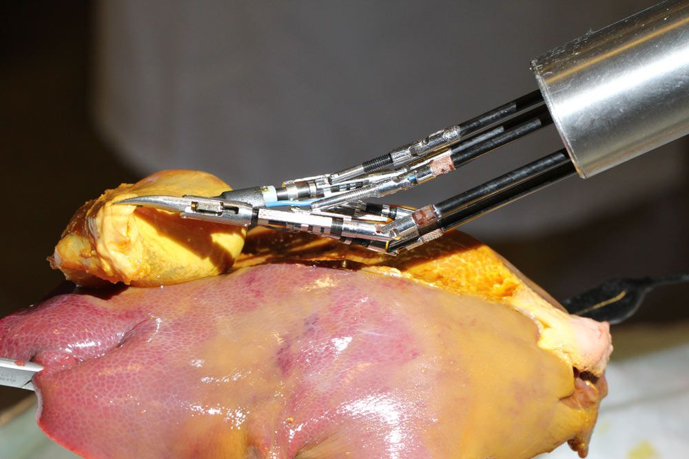 Figure 6. Gall bladder resection in a porcine model using FLEXMIN. (Credit: Carsten Neupert / TU Darmstadt)