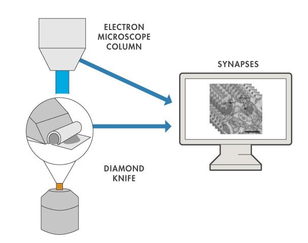 Figure 3. Serial scanning electron microscopy for brain imaging. A probe of neuronal tissue gets imaged and subsequently cut with a custom-built microtome. Alternations of cutting and imaging result in a 3D image stack. Scale bar = 1µm.