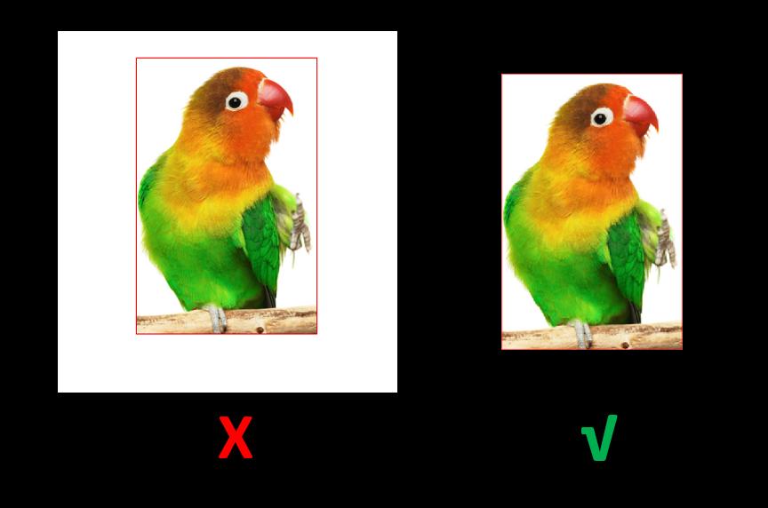 bird4.png