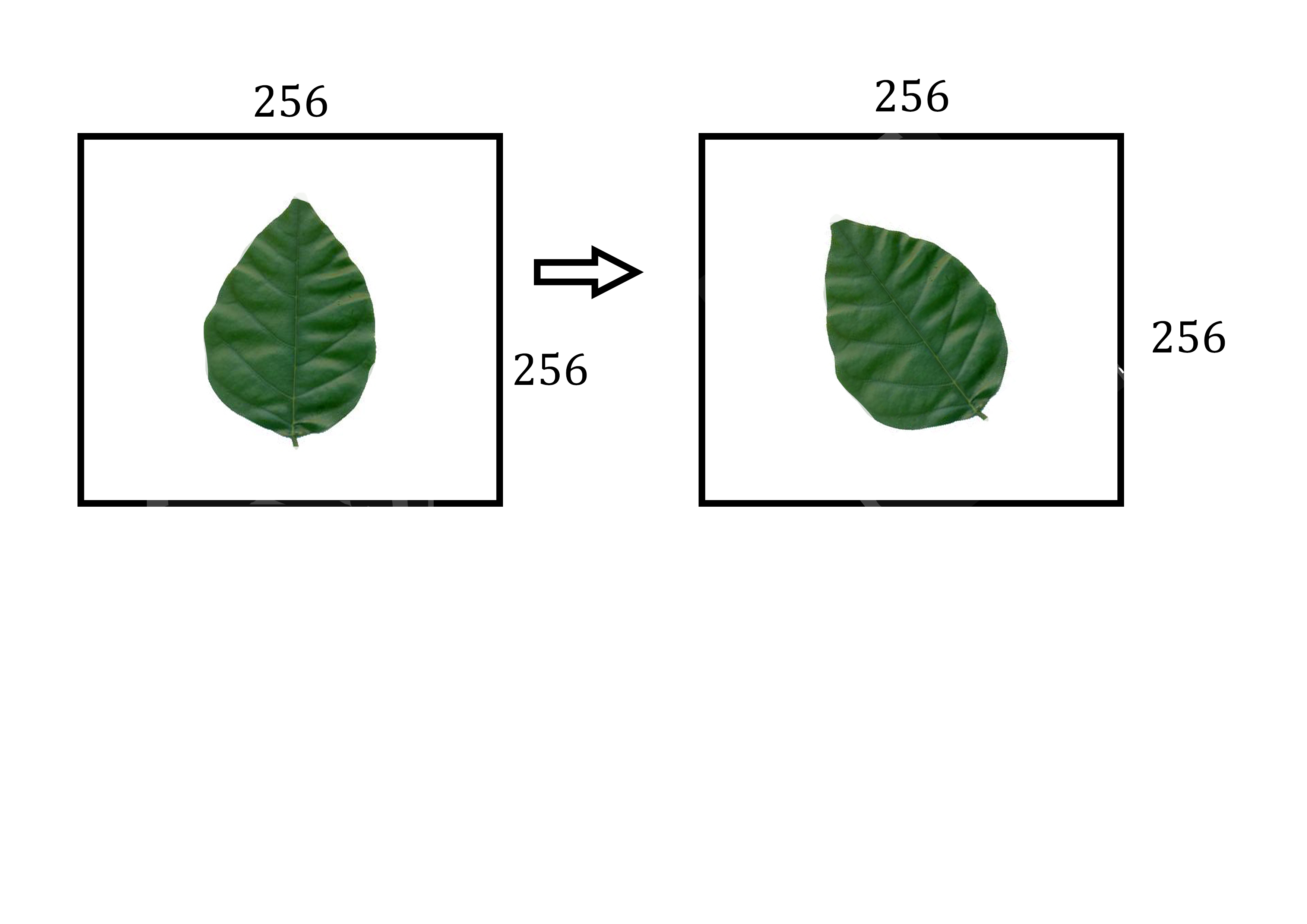 Background image rotate - Rotate Image Segment Without Background Matlab Answers Matlab Central