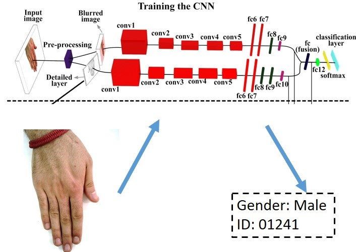 Two stream CNN for biometric recognition - File Exchange - MATLAB