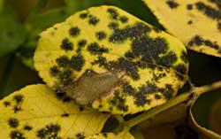 Plant Disease Classification - File Exchange - MATLAB Central